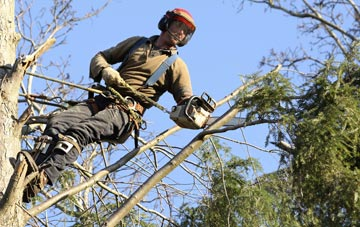 hiring experienced Powys tree surgeons