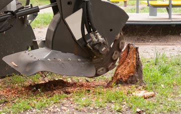 professional Powys stump grinding services