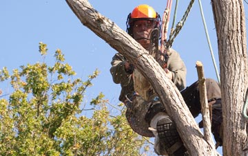 finding qualified Powys tree surgeons