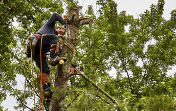 tree surgeon Powys