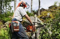 Powys tree removal services