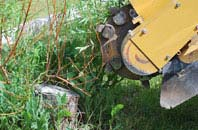 free Powys tree stump grinding quotes