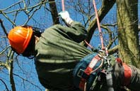 free Powys tree surgeon quotes